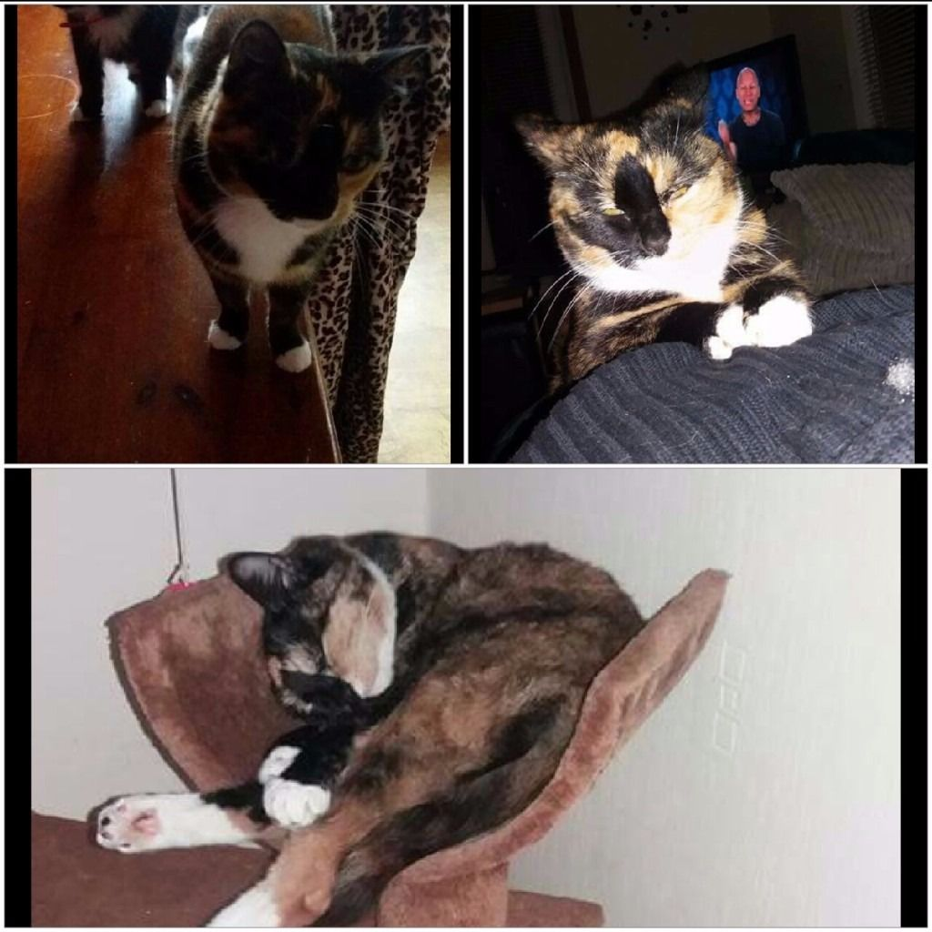 Tootsie is dressed but not chipped please help us find her.