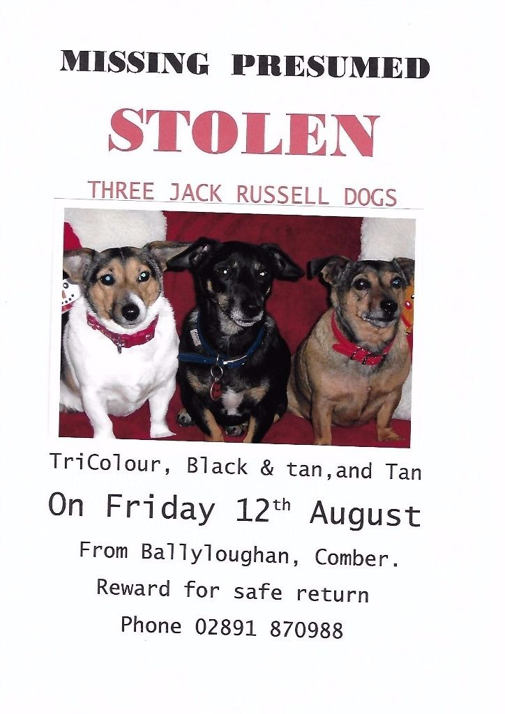 MISSING - 3 JACK RUSSELL DOGS