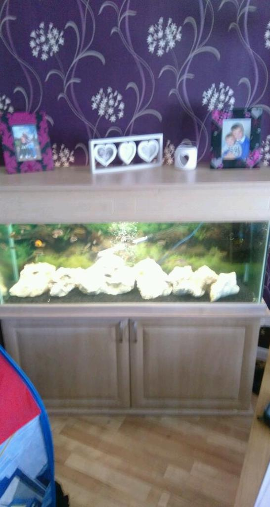 Looking for unwanted tanks and fish and accessories