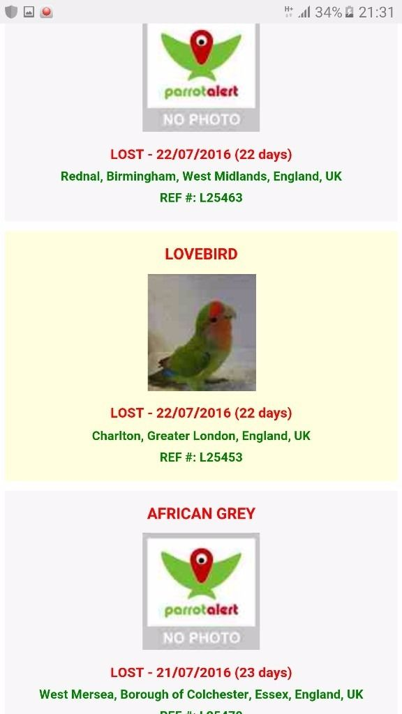 REWARD STOLEN lovebird on medication can be anywhere in UK