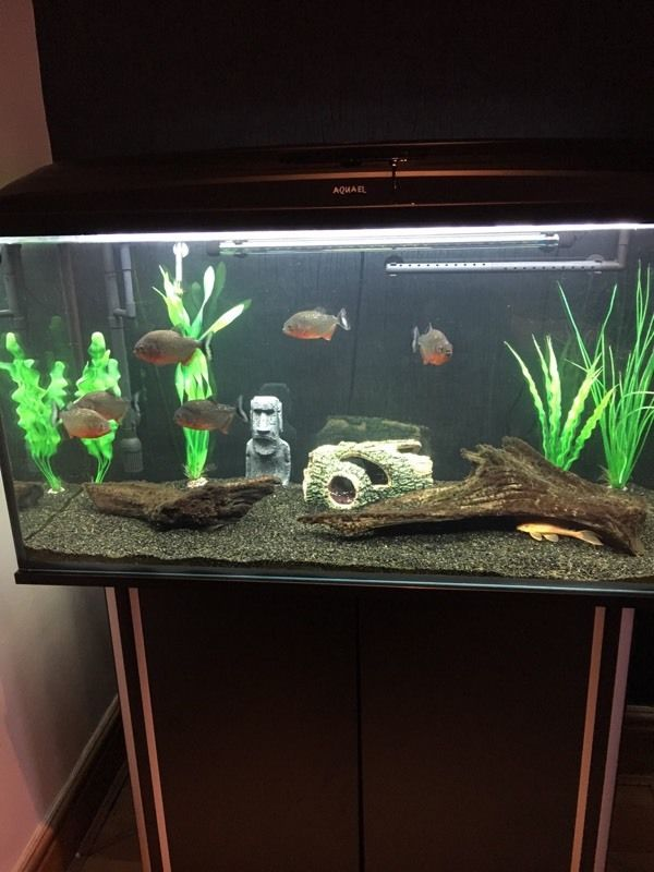 Fish Tank plus all Contents