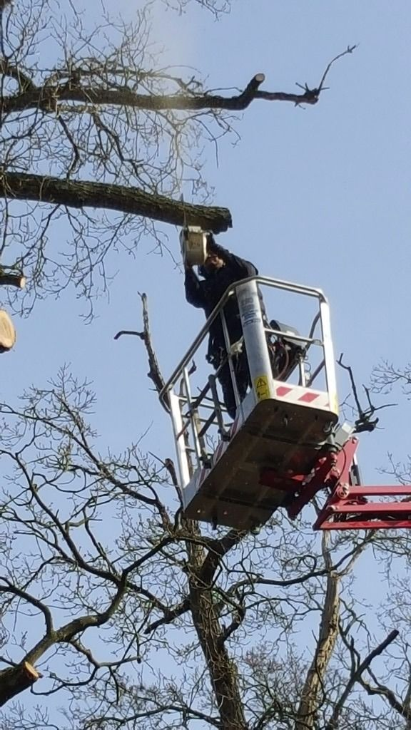 Norfolk suffolk tree surgeon