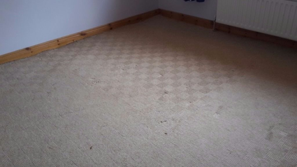 Natural /beige carpet