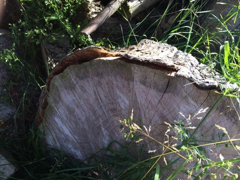 Wood for burning free for uplift