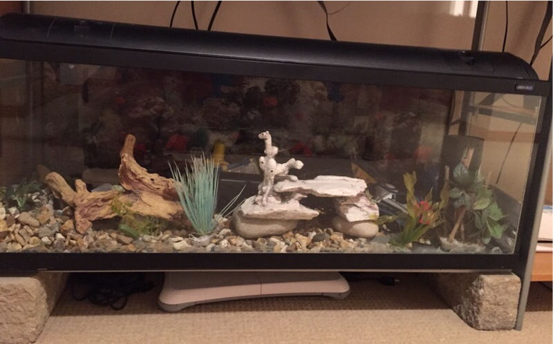 Fish tank with 2x pumps and Accessories