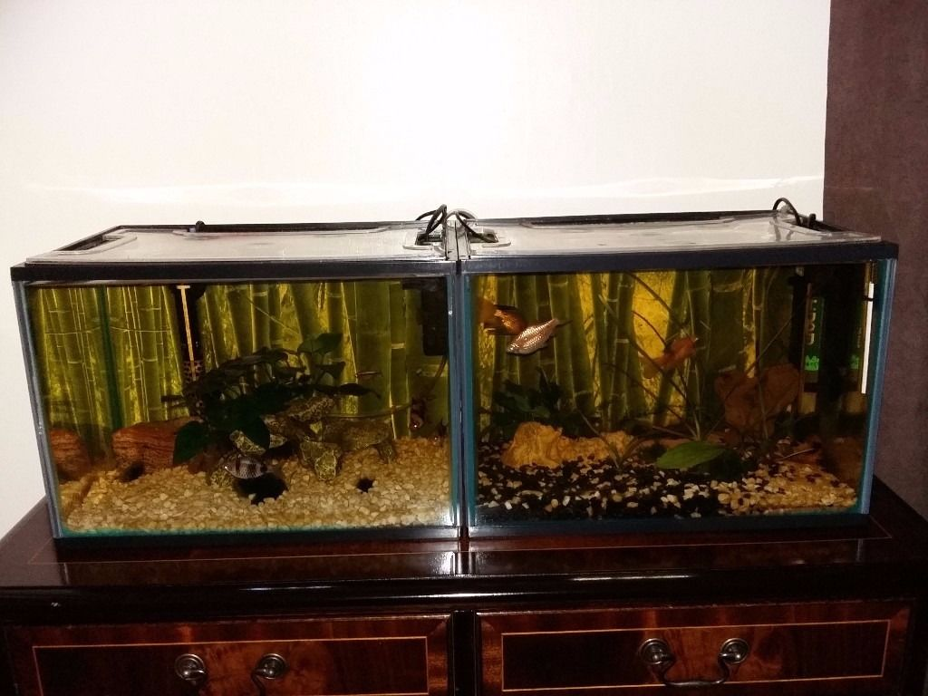 Two fish tanks for sale .