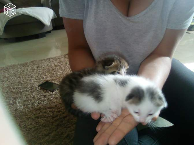 Donne 4 chatons