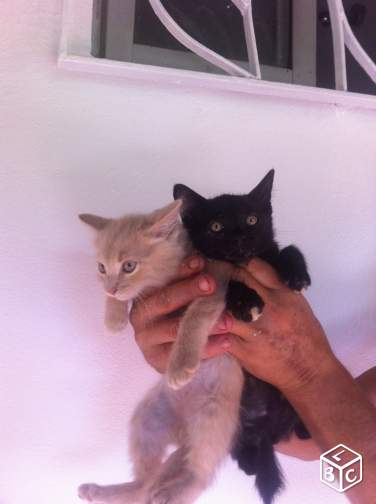 Donne Chatons