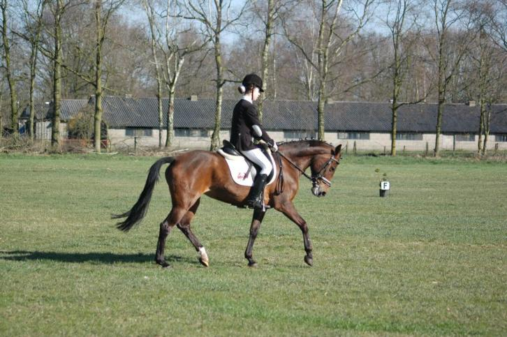 19 jarige new forest d pony