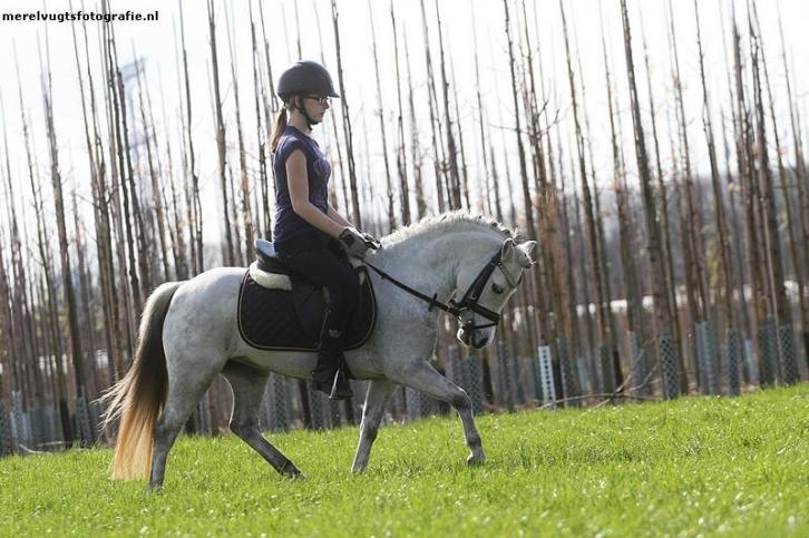 VERKOCHT! Super Chique BOMPROOF All-round A-Pony